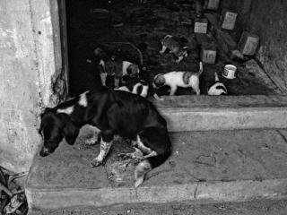 Antigua Strassenhuendin Mit Jungen - Gustav Eckart, Photographie