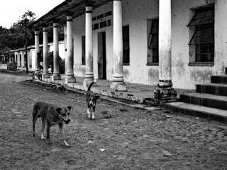 Antigua Strassenhunde - Gustav Eckart, Fotografie