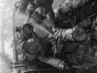 tagliare i tronchi troppo lunghi sul camion - Gustav Eckart, Fotografia