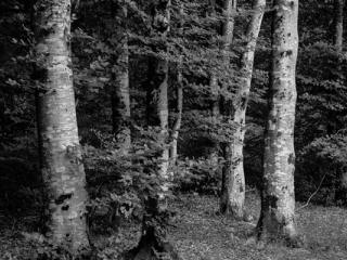 Buchen - Gustav Eckart, Fotografie