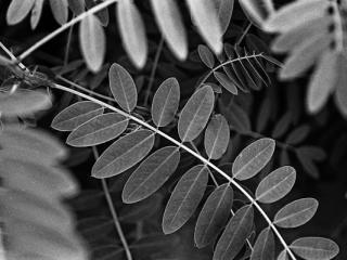 pflanzen-18.jpg - Gustav Eckart, Photography