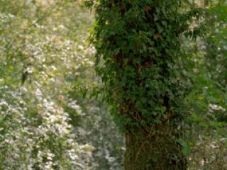 France 2003 15 - Gustav Eckart, Photographie
