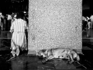 Mexico La Gouadeloupe Hund - Gustav Eckart, Photography