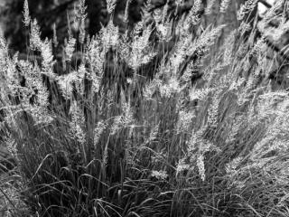 Natur 04 - Gustav Eckart, Fotografie