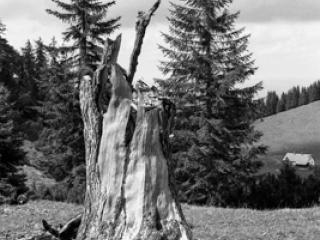 Natur 07 - Gustav Eckart, Fotografia