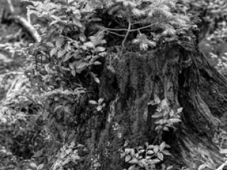 Natur 08 - Gustav Eckart, Photography