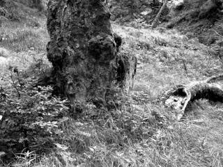 Natur 09 - Gustav Eckart, Fotografia