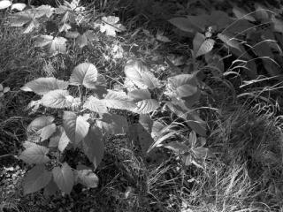 Natur 10 - Gustav Eckart, Photographie