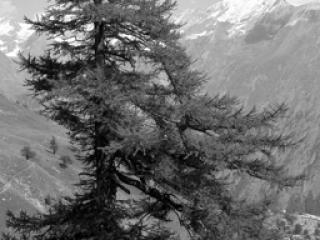 Natur 31 - Gustav Eckart, Photographie
