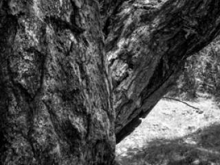 Natur 35 - Gustav Eckart, Fotografie