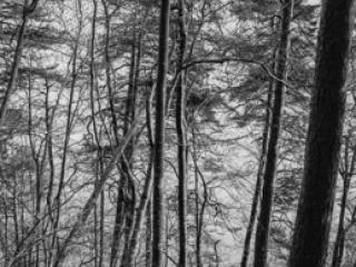 Natur 43 - Gustav Eckart, Photographie