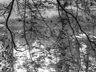 Natur 52 - Gustav Eckart, Fotografia