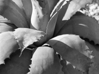 Pflanzen 65 - Gustav Eckart, Fotografie