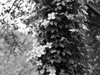 Pflanzen 66 - Gustav Eckart, Fotografie