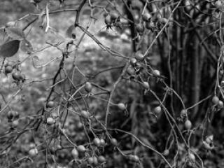 Pflanzen 67 - Gustav Eckart, Photography