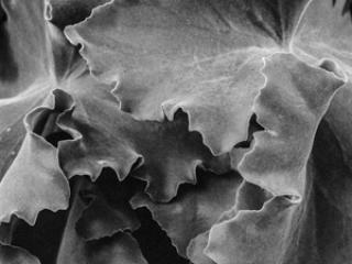 Pflanzen-73 - Gustav Eckart, Fotografia