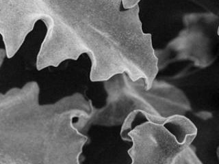 Pflanzen-74 - Gustav Eckart, Photography
