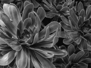 Pflanzen-87 - Gustav Eckart, Photographie