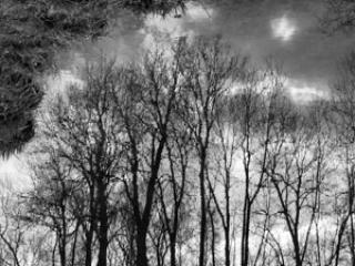 reflets d'arbres - Gustav Eckart, Fotografie