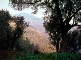 Delphi 1 - Gustav Eckart, Fotografia