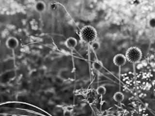 pflanzen-03.jpg - Gustav Eckart, Photography