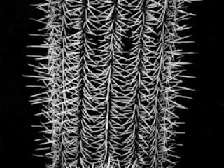 pflanzen-04.jpg - Gustav Eckart, Fotografia