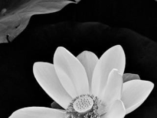 pflanzen-10.jpg - Gustav Eckart, Photography