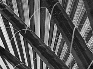 pflanzen-21.jpg - Gustav Eckart, Fotografia