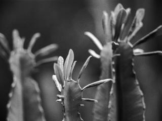 pflanzen-26.jpg - Gustav Eckart, Fotografia