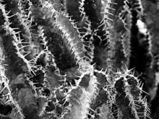 pflanzen-28.jpg - Gustav Eckart, Fotografia