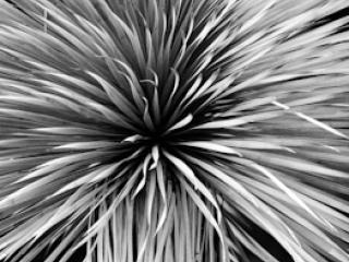 pflanzen-43.jpg - Gustav Eckart, Fotografia
