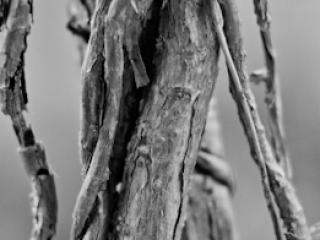 pflanzen-57.jpg - Gustav Eckart, Fotografia