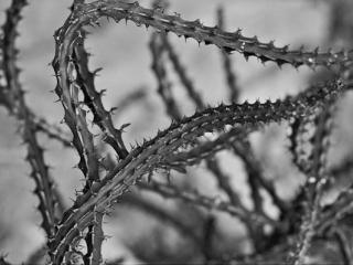 pflanzen-58.jpg - Gustav Eckart, Fotografia