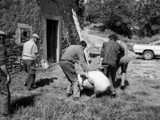 Schweineschlachten 06 - Gustav Eckart, Fotografia