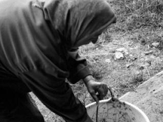 Schweineschlachten 17 - Gustav Eckart, Photographie