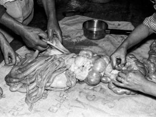 Schweineschlachten 32 - Gustav Eckart, Photographie