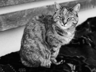 Old cat - Gustav Eckart, Photographie