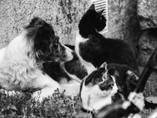 dogs and cat - Gustav Eckart, Photographie