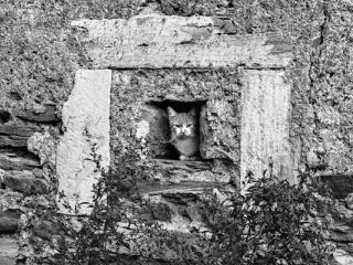 cat - Gustav Eckart, Photographie