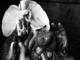 hands heart and lungs - Gustav Eckart, Photography