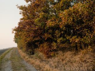 Siegerland 1985 - 40 - Gustav Eckart, Photographie
