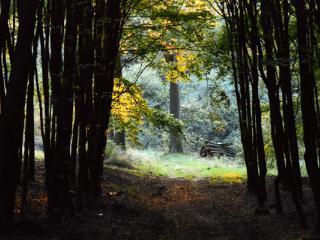 Siegerland 1985 - 10 - Gustav Eckart, Photographie