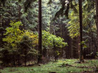 Siegerland 1985 - 12 - Gustav Eckart, Fotografia