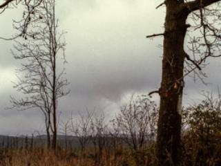 Siegerland 1985 - 16 - Gustav Eckart, Photography