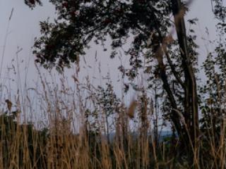 Siegerland 1985 - 33 - Gustav Eckart, Fotografie