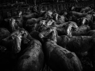 Tiere 40 - Gustav Eckart, Photographie