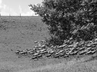 Tiere 42 - Gustav Eckart, Photographie