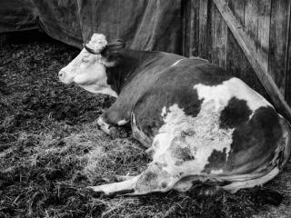 Tiere 47 - Gustav Eckart, Fotografie