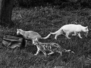 Tiere 50 - Gustav Eckart, Photographie