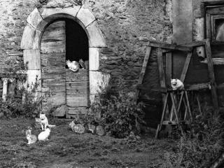 Tiere 51 - Gustav Eckart, Fotografie